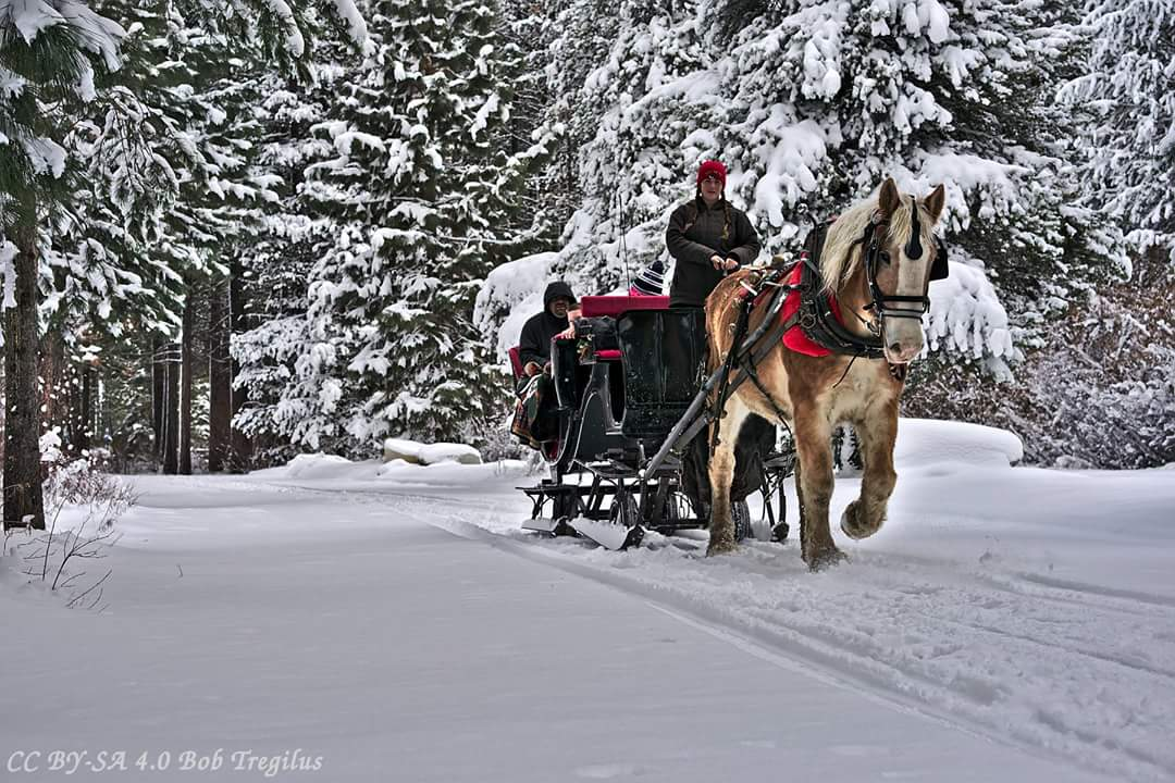 24+ Sleigh Rides Crafter Files
