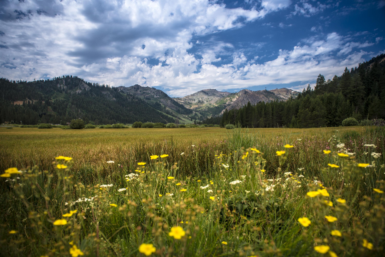 crystal meadows of tahoe