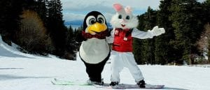 Easter_bunny_pete_web_720_310