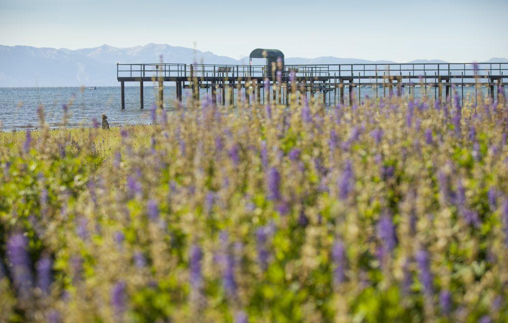 Credit_ Brin R Photo 7_11_2015 Lupins Tahoe 008